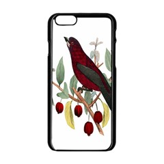 Bird On Branch Illustration Apple Iphone 6/6s Black Enamel Case by Amaryn4rt