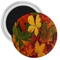 Colorful Autumn Leaves Leaf Background 3  Magnets by Amaryn4rt
