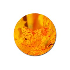Bright Yellow Autumn Leaves Magnet 3  (round) by Amaryn4rt