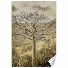 Ceiba Tree At Dry Forest Guayas District   Ecuador Canvas 12  X 18   by dflcprints