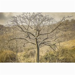 Ceiba Tree At Dry Forest Guayas District   Ecuador Canvas 24  X 36  by dflcprints