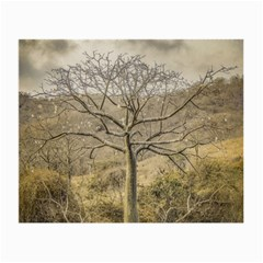 Ceiba Tree At Dry Forest Guayas District   Ecuador Small Glasses Cloth (2 Side) by dflcprints