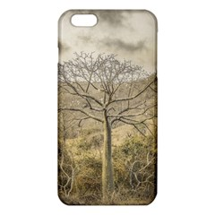 Ceiba Tree At Dry Forest Guayas District   Ecuador Iphone 6 Plus/6s Plus Tpu Case by dflcprints
