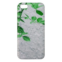 Plants Over Wall Apple Iphone 5 Premium Hardshell Case by dflcprints