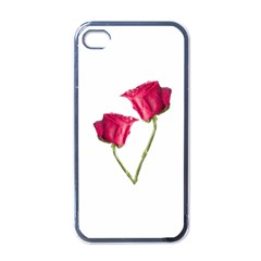 Red Roses Photo Apple Iphone 4 Case (black) by dflcprints