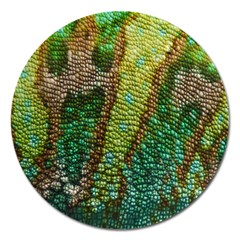 Colorful Chameleon Skin Texture Magnet 5  (round) by Simbadda