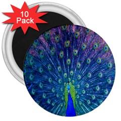 Amazing Peacock 3  Magnets (10 Pack)  by Simbadda