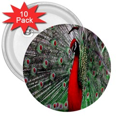 Red Peacock 3  Buttons (10 Pack)  by Simbadda