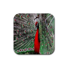 Red Peacock Rubber Coaster (square)  by Simbadda