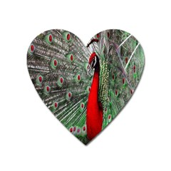 Red Peacock Heart Magnet by Simbadda