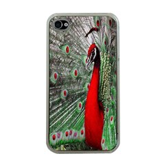 Red Peacock Apple Iphone 4 Case (clear) by Simbadda