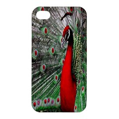 Red Peacock Apple Iphone 4/4s Hardshell Case by Simbadda
