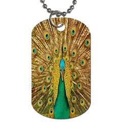 Peacock Bird Feathers Dog Tag (one Side) by Simbadda