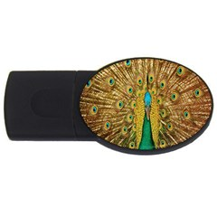 Peacock Bird Feathers Usb Flash Drive Oval (4 Gb) by Simbadda