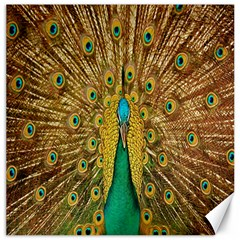 Peacock Bird Feathers Canvas 20  X 20   by Simbadda