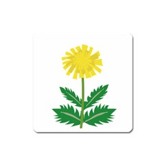 Sunflower Floral Flower Yellow Green Square Magnet
