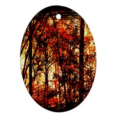 Forest Trees Abstract Ornament (oval) by Nexatart