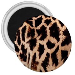 Yellow And Brown Spots On Giraffe Skin Texture 3  Magnets by Nexatart