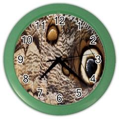Butterfly Wing Detail Color Wall Clocks