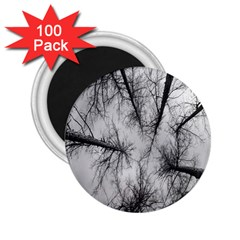 Trees Without Leaves 2 25  Magnets (100 Pack)  by Nexatart