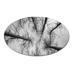 Trees Without Leaves Oval Magnet by Nexatart