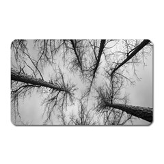 Trees Without Leaves Magnet (rectangular) by Nexatart