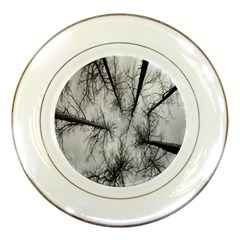 Trees Without Leaves Porcelain Plates by Nexatart