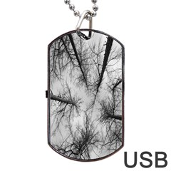 Trees Without Leaves Dog Tag Usb Flash (two Sides) by Nexatart