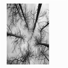 Trees Without Leaves Small Garden Flag (two Sides) by Nexatart