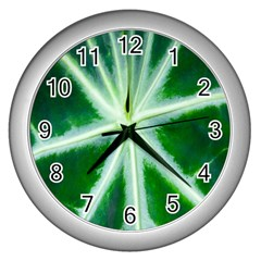 Green Leaf Macro Detail Wall Clocks (silver)  by Nexatart