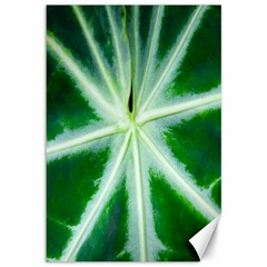 Green Leaf Macro Detail Canvas 12  X 18   by Nexatart