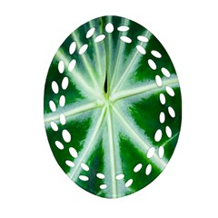 Green Leaf Macro Detail Oval Filigree Ornament (two Sides) by Nexatart