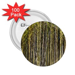 Bamboo Trees Background 2 25  Buttons (100 Pack)