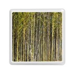 Bamboo Trees Background Memory Card Reader (square)  by Nexatart
