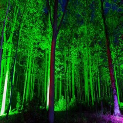 Spooky Forest With Illuminated Trees Magic Photo Cubes by Nexatart