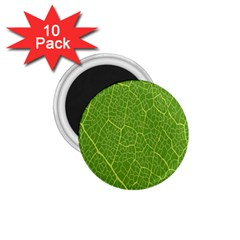 Green Leaf Line 1 75  Magnets (10 Pack)  by Mariart