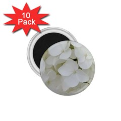 Hydrangea Flowers Blossom White Floral Photography Elegant Bridal Chic  1 75  Magnets (10 Pack)  by yoursparklingshop