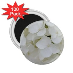 Hydrangea Flowers Blossom White Floral Photography Elegant Bridal Chic  2 25  Magnets (100 Pack)  by yoursparklingshop