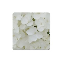 Hydrangea Flowers Blossom White Floral Photography Elegant Bridal Chic  Square Magnet by yoursparklingshop