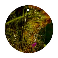 Dragonfly Dragonfly Wing Insect Ornament (round)