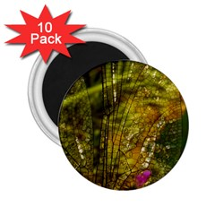 Dragonfly Dragonfly Wing Insect 2 25  Magnets (10 Pack)