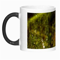 Dragonfly Dragonfly Wing Insect Morph Mugs by Nexatart