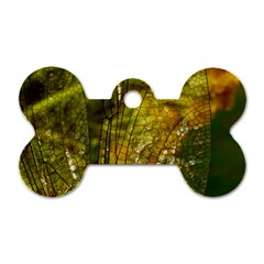 Dragonfly Dragonfly Wing Insect Dog Tag Bone (two Sides) by Nexatart