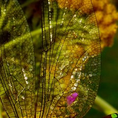Dragonfly Dragonfly Wing Insect Magic Photo Cubes