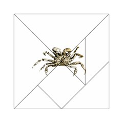 Dark Crab Photo Acrylic Tangram Puzzle (6  X 6 ) by dflcprints