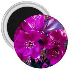 Pretty In Fuchsia 3  Magnets by dawnsiegler