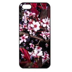 Morning Sunrise Apple Iphone 5 Seamless Case (black) by dawnsiegler