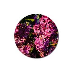 Lilacs Magnet 3  (round) by dawnsiegler