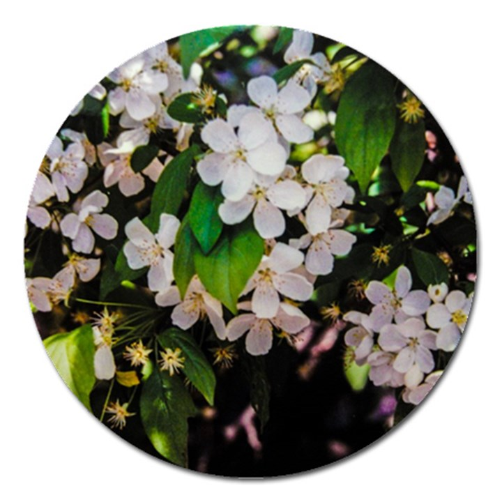 Tree Blossoms Magnet 5  (Round)
