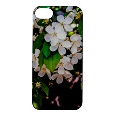 Tree Blossoms Apple Iphone 5s/ Se Hardshell Case by dawnsiegler